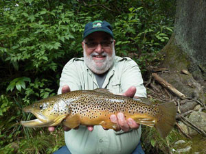 A Davidson River brown trout