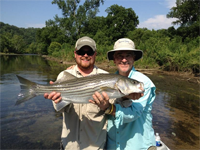 Asheville fly fishing guide, Jake Chiles, with a big Watauga River Striped bass.