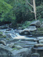 Asheville fly fishing guides
