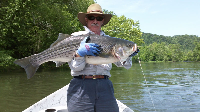 Smallmouth bass fishing report includes stream conditions for French broad river fishing