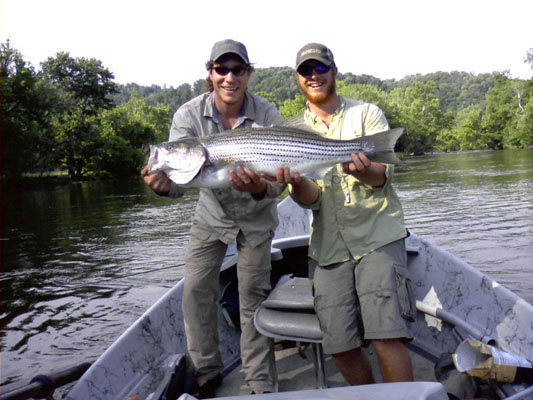 A big striped bass for Watauga river fishing